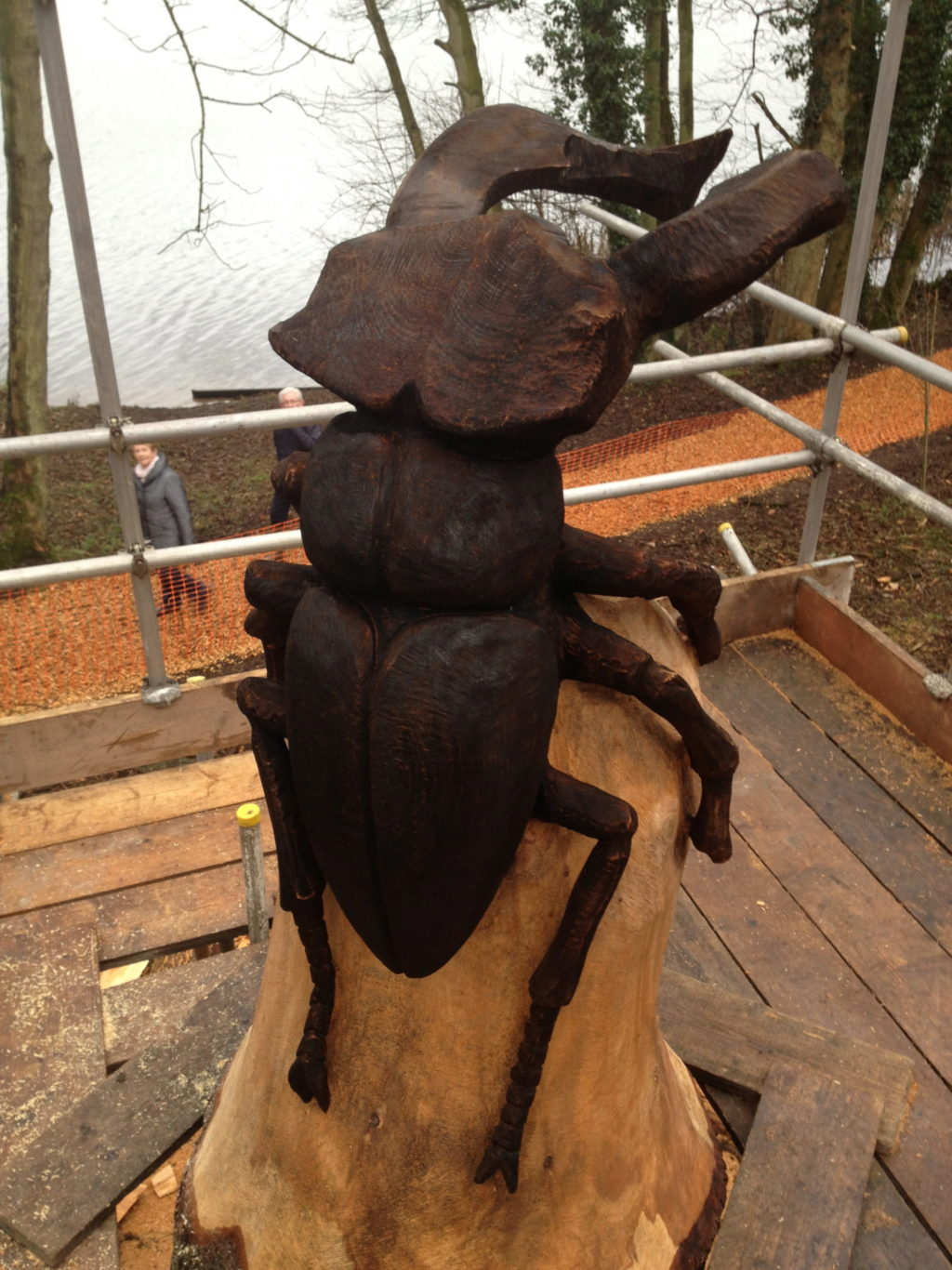 Large Stag Beetle